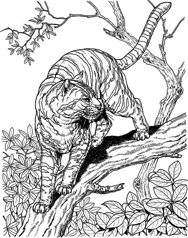 Cat Coloring Pages For Adults 15