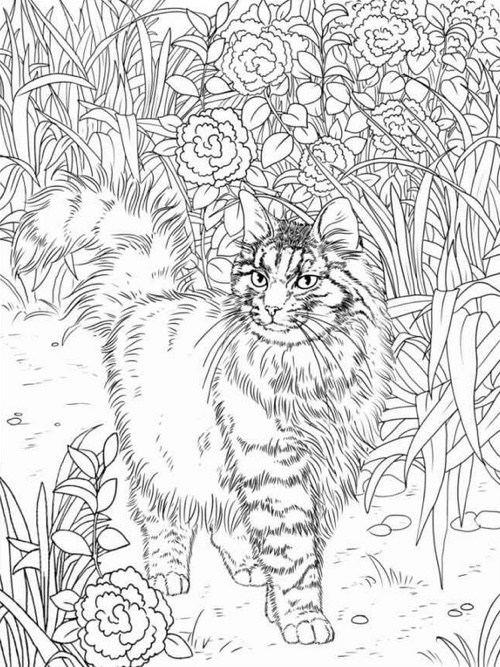 Cat Coloring Pages For Adults 33
