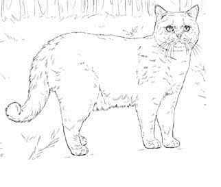 Cat Coloring Pages For Adults 37