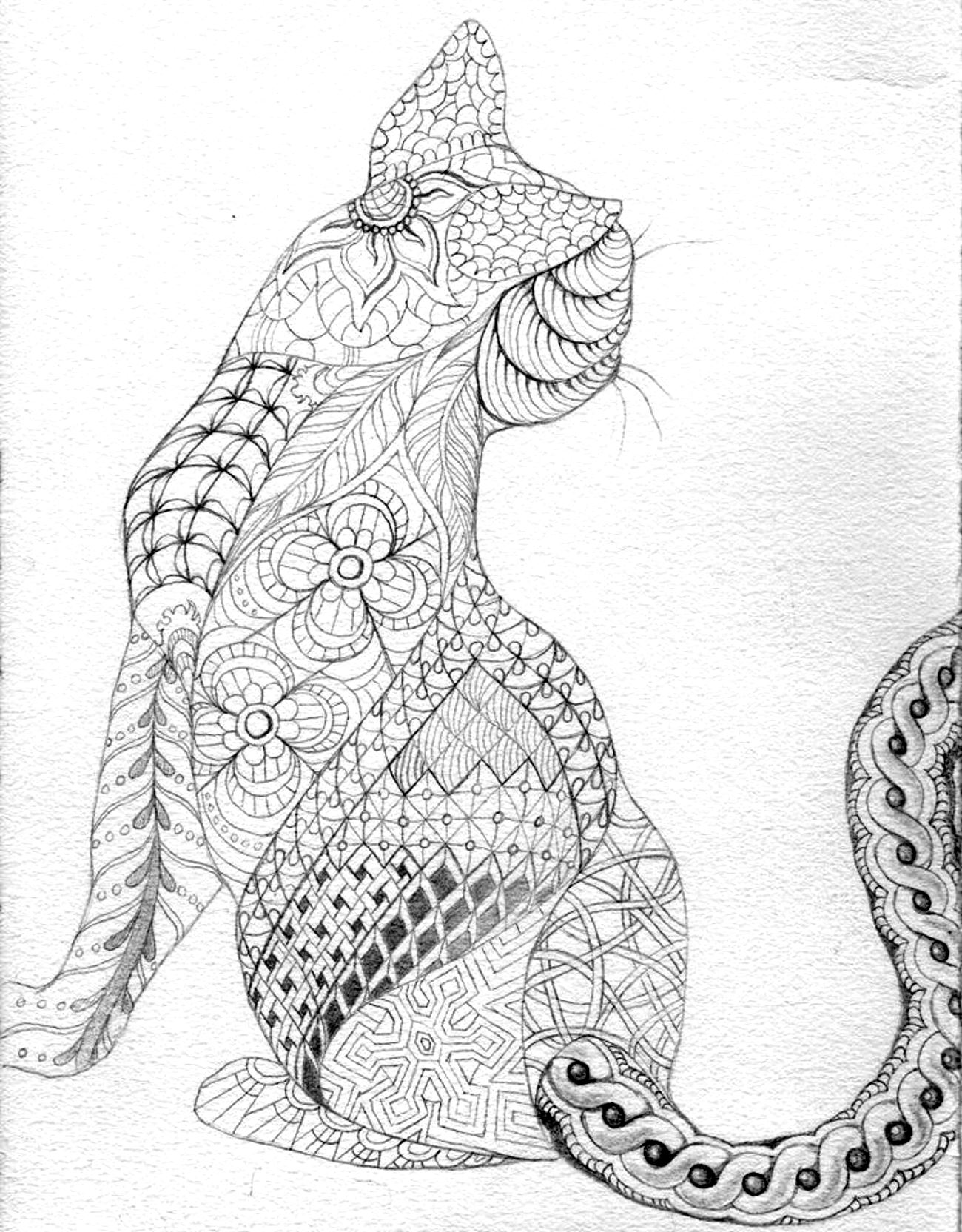 Cat Coloring Pages For Adults 46