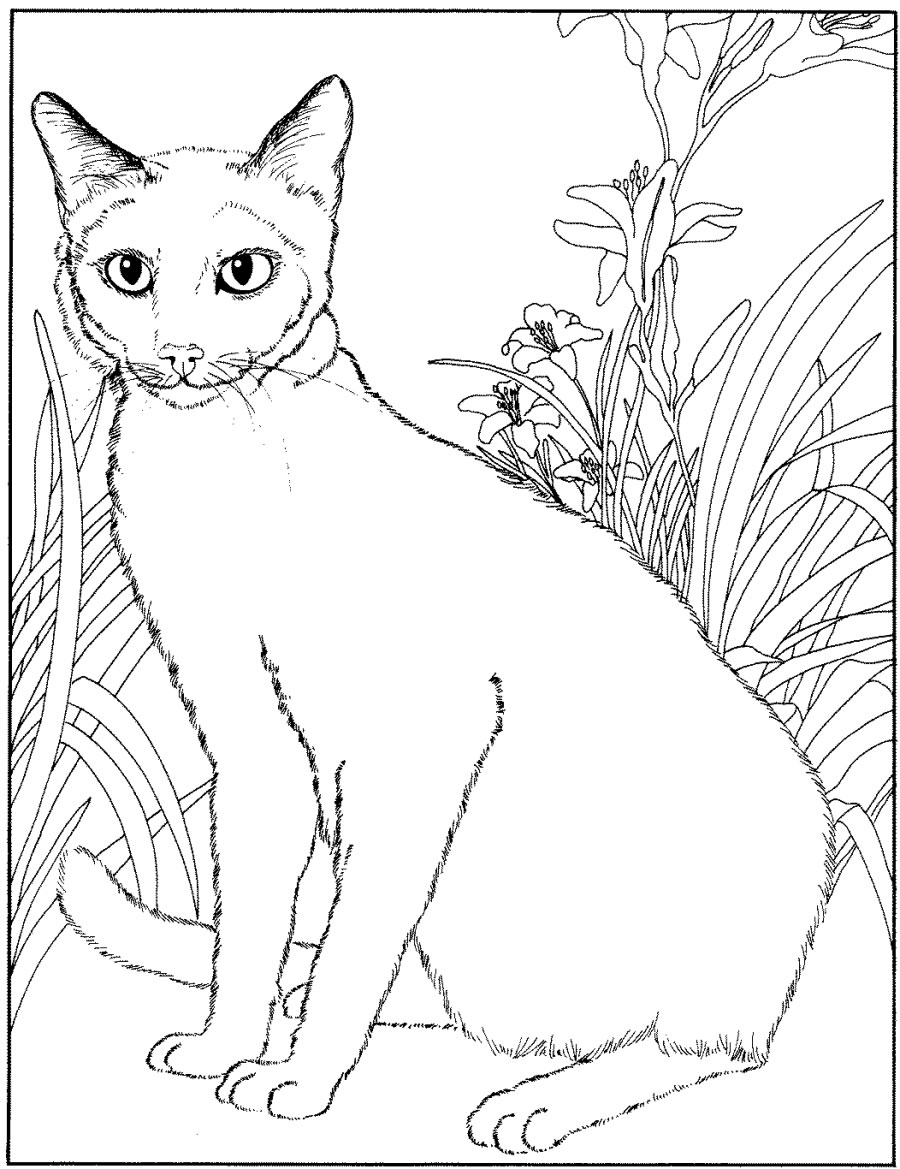 Cat Coloring Pages For Adults 51