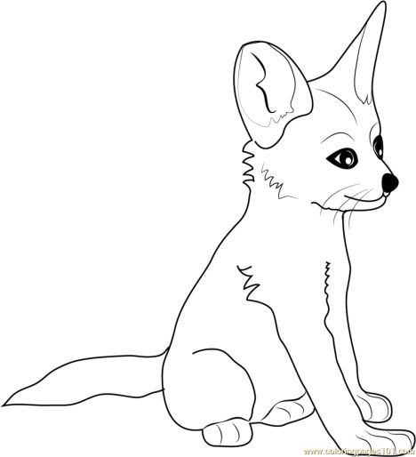 Cute Baby Fox Coloring Pages 26