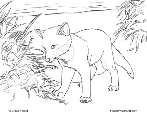 Cute Baby Fox Coloring Pages 33