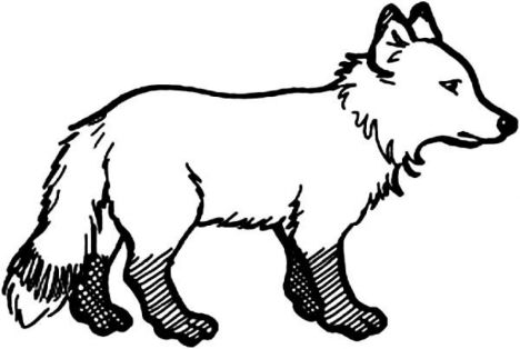 Cute Baby Fox Coloring Pages 4
