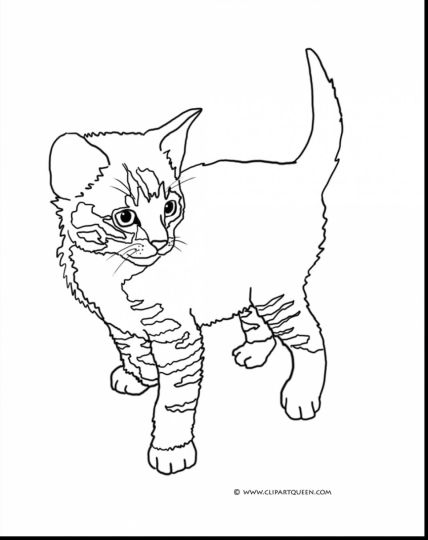 Cute Kitten Coloring Pages 55
