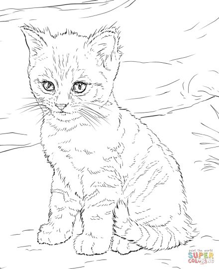 Cute Kitten Coloring Pages 9