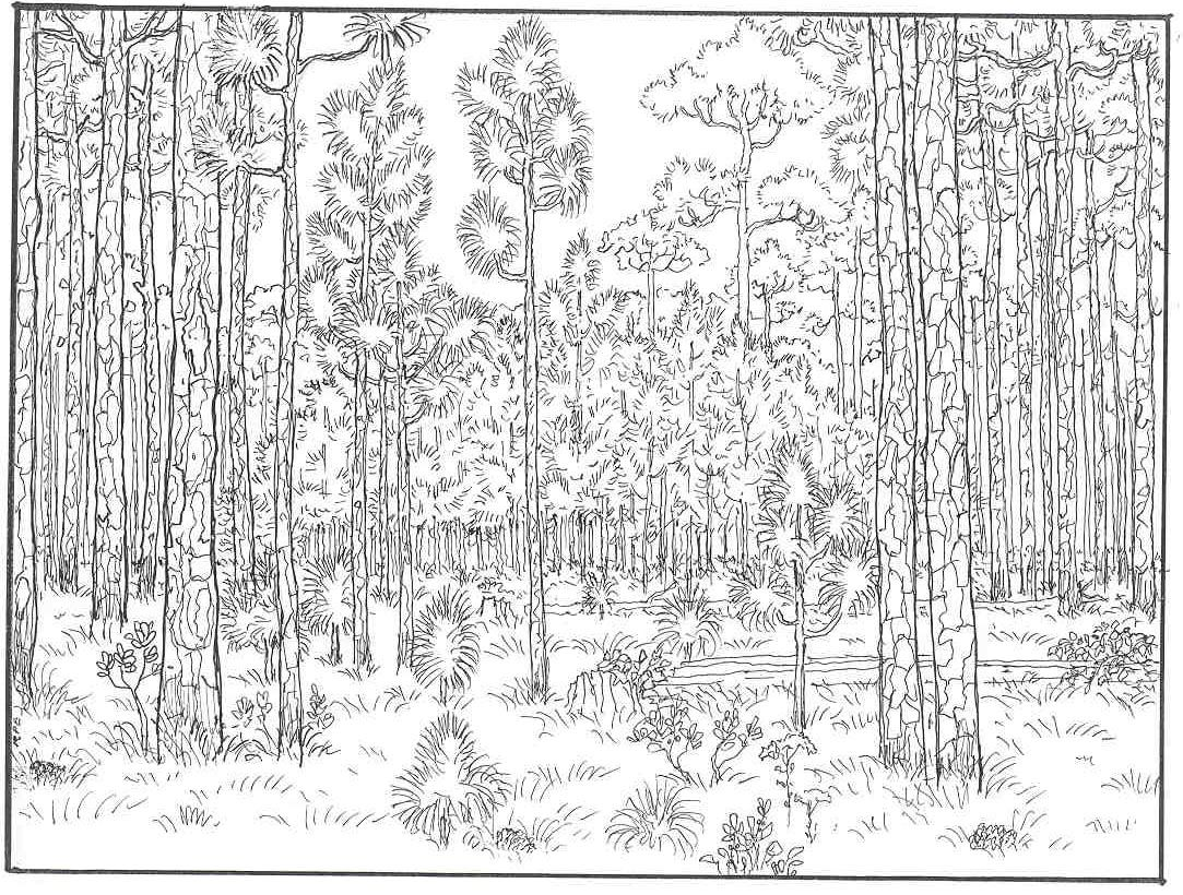 Detailed Landscape Coloring Pages For Adults 25