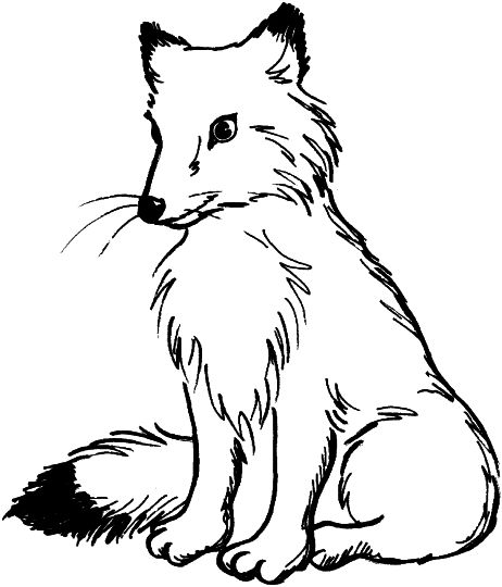 Fox Coloring Pages for Preschoolers 23