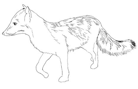 Fox Coloring Pages for Preschoolers 6