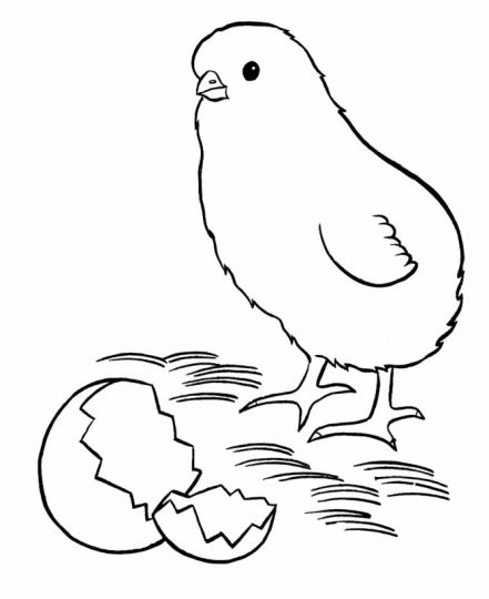 Easter Chick Coloring Pages Part 3 - Easter-chick-coloring-pages