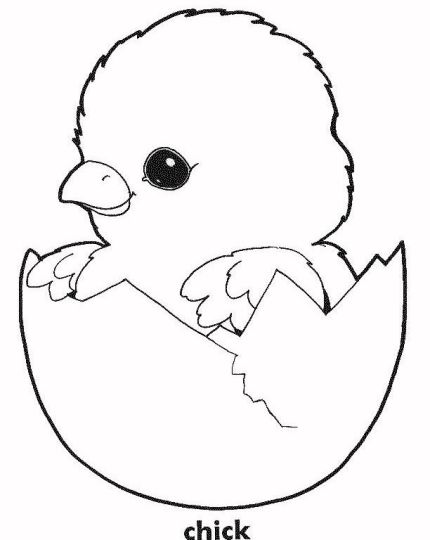 Easter Chick Coloring Pages 22