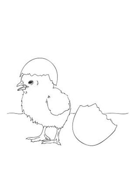 Easter Chick Coloring Pages 6