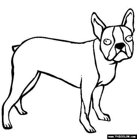 French Bulldog Coloring Pages 1