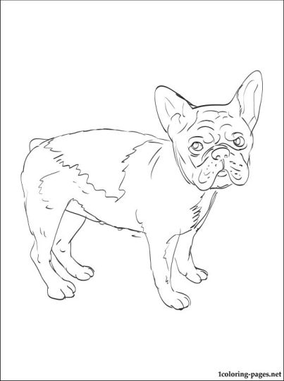 French Bulldog Coloring Pages 12