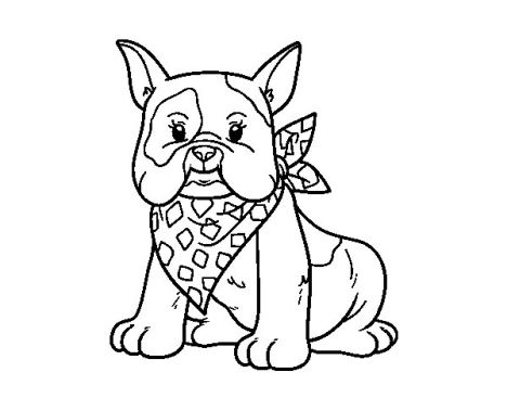 French Bulldog Coloring Pages 14
