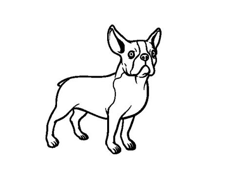 French Bulldog Coloring Pages 18