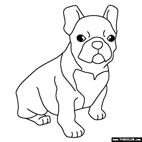 French Bulldog Coloring Pages 19