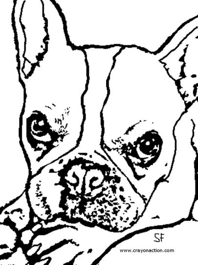 French Bulldog Coloring Pages 2