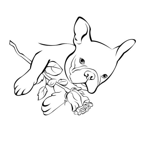 French Bulldog Coloring Pages 20