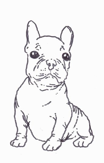 French Bulldog Coloring Pages 24