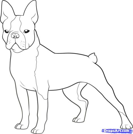 French Bulldog Coloring Pages 3