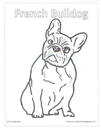French Bulldog Coloring Pages 32