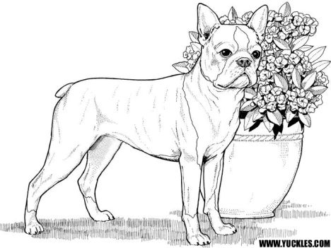 French Bulldog Coloring Pages 4