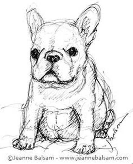 French Bulldog Coloring Pages - Part 5
