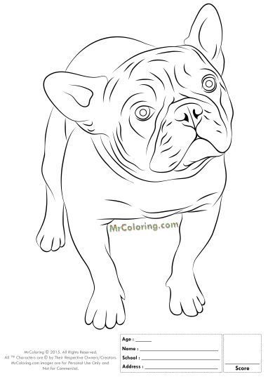 French Bulldog Coloring Pages 45