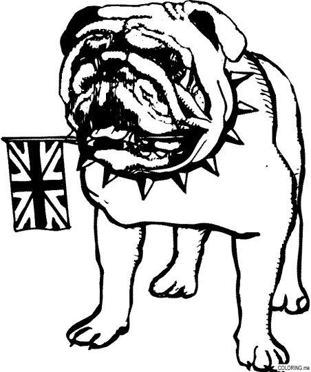 Georgia English Bulldog Coloring Pages 14