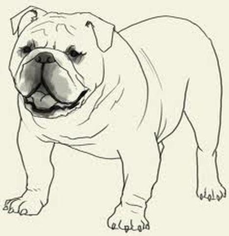 Georgia English Bulldog Coloring Pages 16