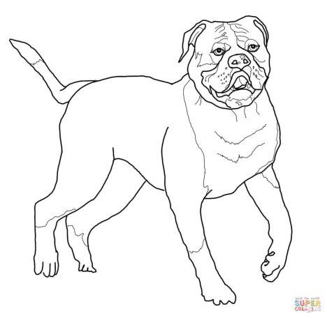 Georgia English Bulldog Coloring Pages 20