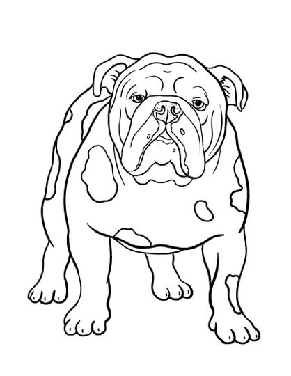Georgia English Bulldog Coloring Pages 29