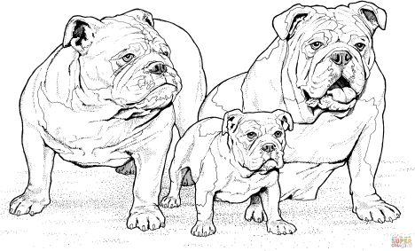 Georgia English Bulldog Coloring Pages 43