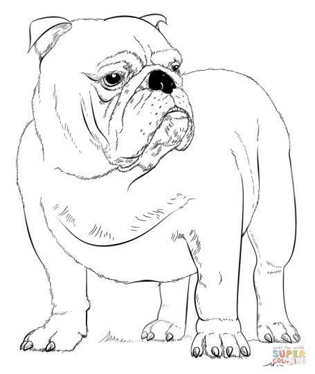 Georgia English Bulldog Coloring Pages 44