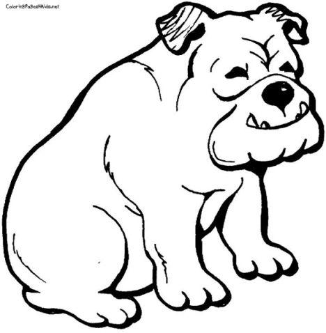 Georgia English Bulldog Coloring Pages 5