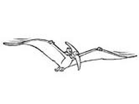 Pterodactyl Colouring Pages 10