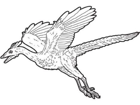 Pterodactyl Colouring Pages 2