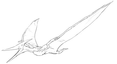 Pterodactyl Colouring Pages 31