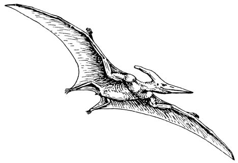 Pterodactyl Colouring Pages 4