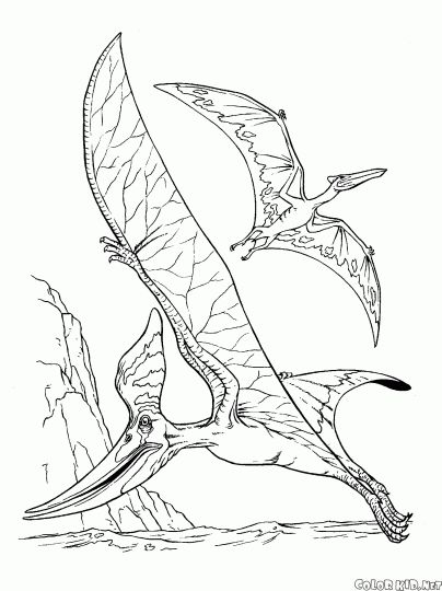 Pterodactyl Colouring Pages 50