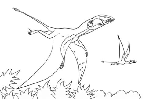 Pterodactyl Colouring Pages 9